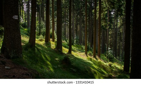 Nice steep forest with moss