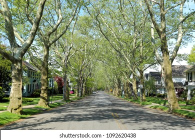 Nice suburban alley or mall, lined with shade trees,Bellerose is a middle class neighborhood on the eastern edge of the New York City borough of Queens, along the border of Queens and Nassau County.