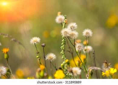 Nice summer flowers on meadow