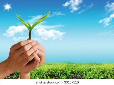 Nice summer picture with green plant on the hand