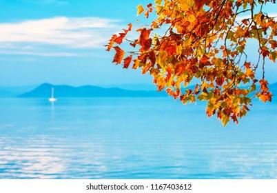 Nice trees in autumn at lake Balaton, Hungary
