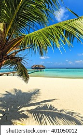 Nice tropical beach, Maldives, The Indian Ocean