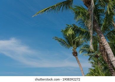 nice tropical with blue sky, palms tree, green leave