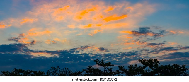 Nice twilight sky with sunset light and silhouette of tree foreground