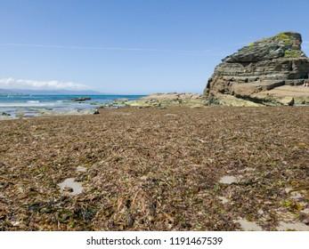 Nice view of seaweed beach on a sunny day