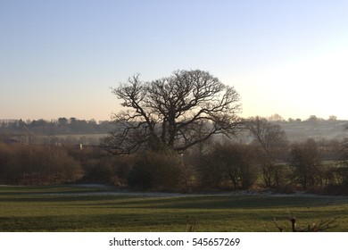Nice view of trees in meadows at Ripley Castle, Harrogate during sunset