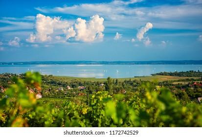 Nice vineyard in Hungary at lake Balaton