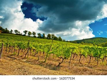 Nice vineyard in Tuscany, Italy