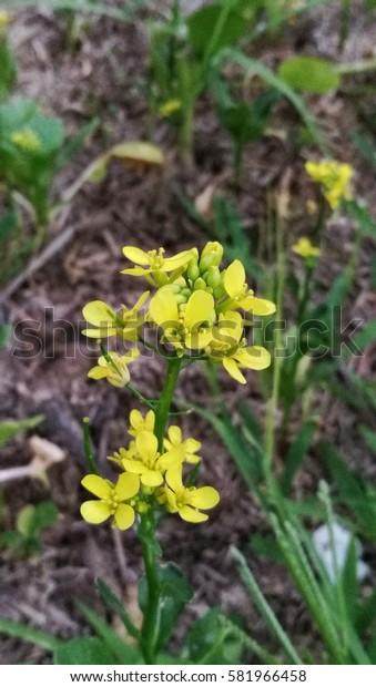 The nice yellow flowers in garden