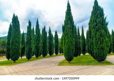 Nicely decorated park decorated with green cypresses.