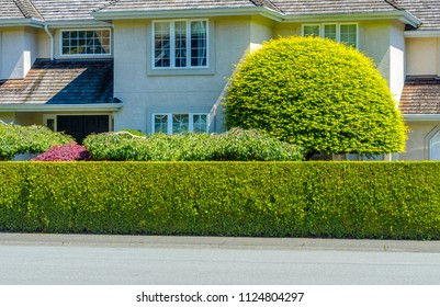 Nicely trimmed bushes, green fence. Separate and protect private property.  Landscape design.