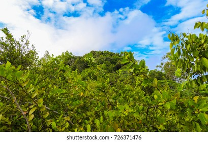 Nid d'Aigle trail in the mountains of La Digue island. Flora and wild nature of Seychelles islands. Africa - Shutterstock ID 726371476
