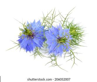 Nigella sativa or fennel flower, nutmeg flower, black caraway, Roman coriander, black cumin, black sesame, blackseed, black caraway, Bunium persicum. Isolated.