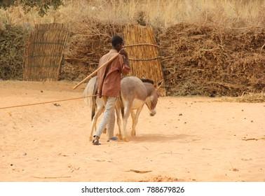 Niger, Niamey - December 20, 2017: donkey in desert
