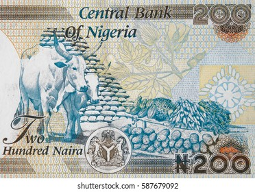 Nigeria 200 naira  banknote close up, Nigerian money closeup.