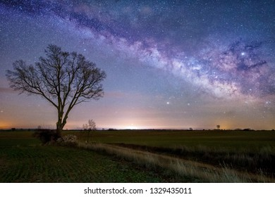 Night astrophotography: Milky Way over a tree in Guadalajara countryside, Spain