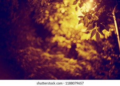 Night background with autumn leaves, in light from a lantern