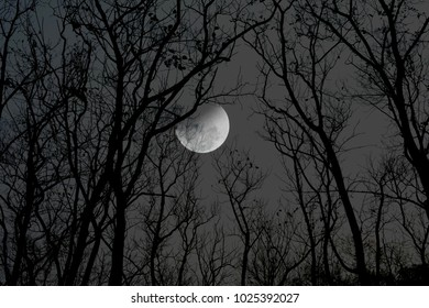 Night background of silhouette tree over moon in the sky.  Can used for Halloween concept.