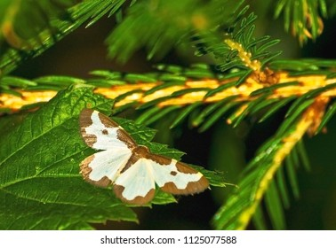 night butterfly on leaf