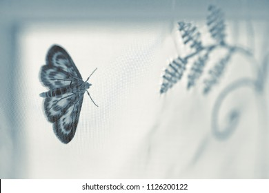 Night butterfly through the translucent curtain looks at the embroidered flowers.