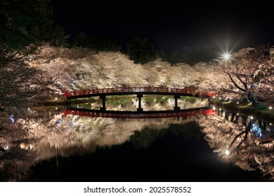 Night cherry blossoms that are lit up and shine on the surface of the water
