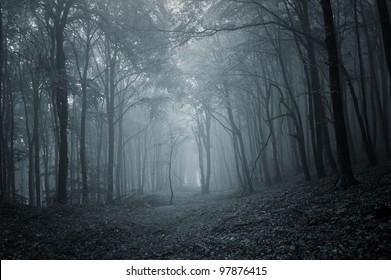 night in a dark forest