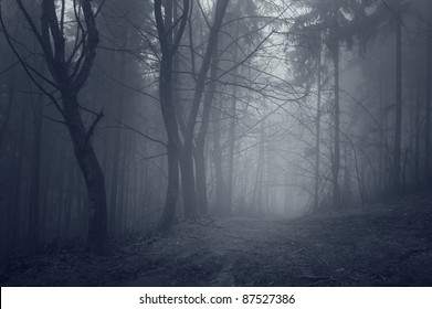 night in a dark forest with fantasy mood