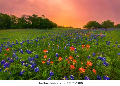 A night of excitement shooting the Milky Way over bluebonnets growing on a beautiful ranch in Ennis, Texas culminated in a brief moment of color in the sky before the spring storm clouds moved in.