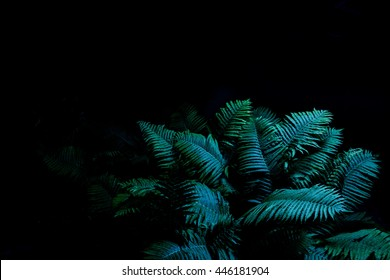 Night forest. Fern bush in the dark of night