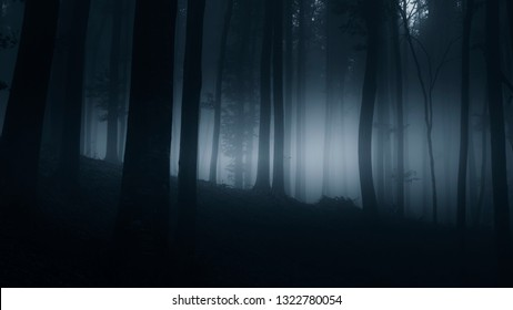 night forest landscape, misty fantasy landscape