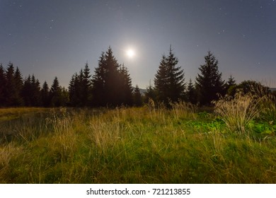 night forest in a moonshine