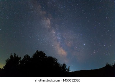 night forest silhouette under a starry sky with milky way