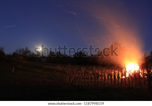 Night image of fire burning near corn plants and moon light in the background.