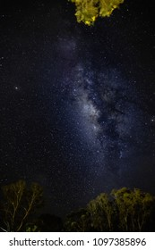 Night image of the milk way in the clean sky and some trees at the bottom