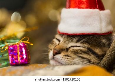 Night, kitten sleeping on the sofa