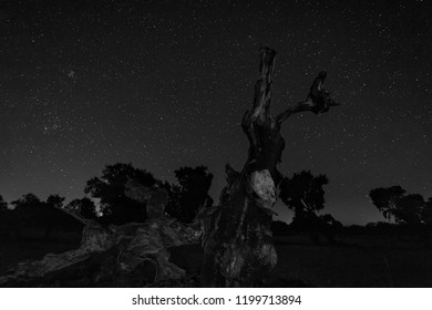 Night landscape with fallen tree in the foreground.