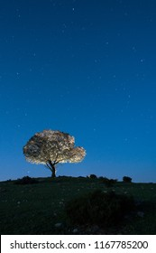 Night landscape, oak, stars, clouds, silhouette