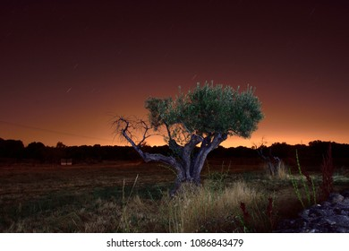 Night landscape with olive tree