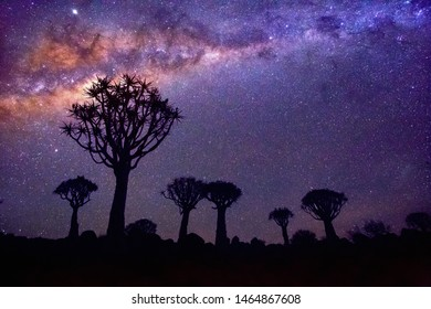 Night landscape of quiver tree forest near Keetmanshoop in Namibia at sunset