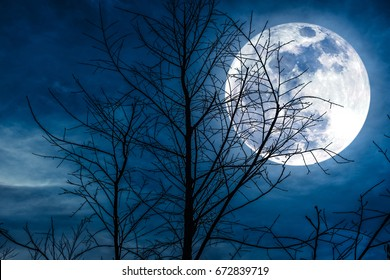 Night landscape of sky and super moon with bright moonlight behind silhouette of dead tree, serenity nature background. Outdoors at nighttime.The moon taken with my own camera.