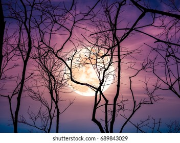 Night landscape of sky and super moon with bright moonlight behind silhouette of dead tree, serenity nature background. Outdoors at nighttime. The moon taken with my own camera.