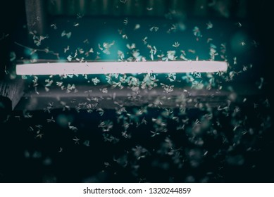Night light and flying mayfly movement, playing light of termites flying after rain or before rain in the rainy season