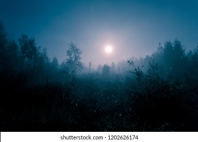 Night mysterious landscape in cold tones - silhouettes of the forest trees under the full moon and dramatic night sky.