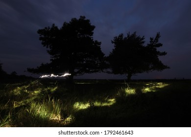 Night photo of Scots pine with light trail in Dwingelderveld, The Netherlands