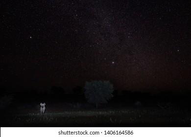 Night photo of wild Spotted hyena, Crocuta crocuta, gently illuminated predator on the edge of dark wilderness staring at camera against stars sky. African nature in night. Kgalagadi, Botswana.