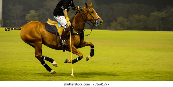 At Night Polo player and horse playing in match.