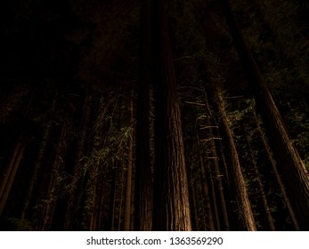 Night scene of giant Sequoia trees in Redwood forests of northern California