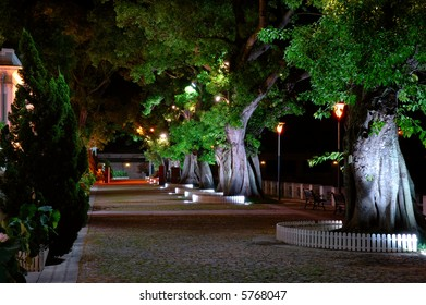 The night scene, growing trees beside a street