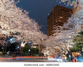 Night scenery of Roppongi Ark Hills in Downtown Tokyo, with light trails of cars on the street & beautiful illumination of Japanese cherry blossom trees on the sidewalk during Sakura Matsuri Festival