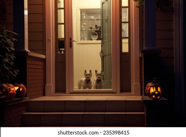 Night shot of dogs at a door on Halloween